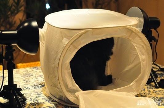 catlighthouseLR