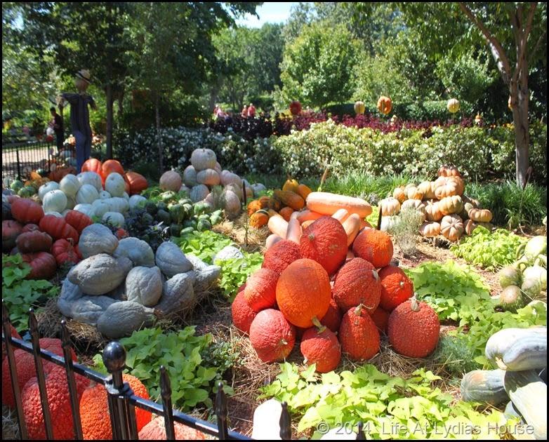 Dallas Arboretum - pumpkin festival-pumpkin village 1