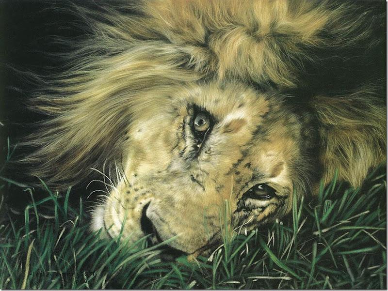 animales tiernos (10)
