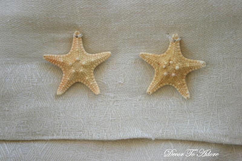seashells 024