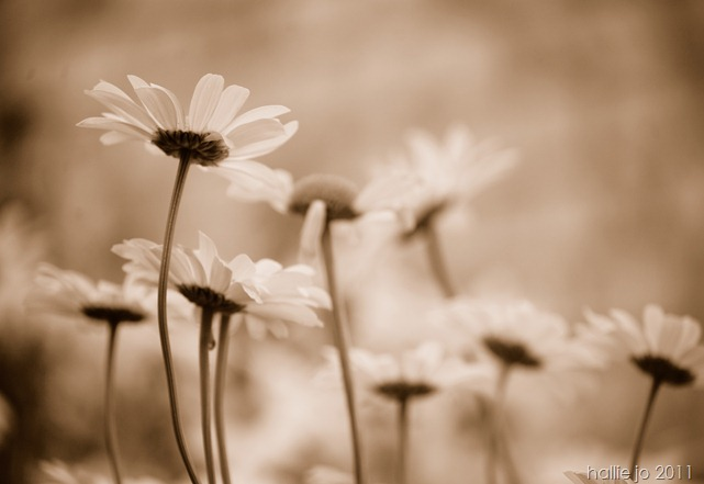 Fleur18