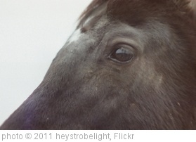 'the black horse.' photo (c) 2011, heystrobelight - license: http://creativecommons.org/licenses/by-nd/2.0/