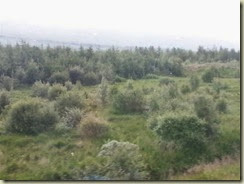 20140711_trees from siberia (Small)