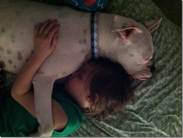 dog-mans-best-friend-1