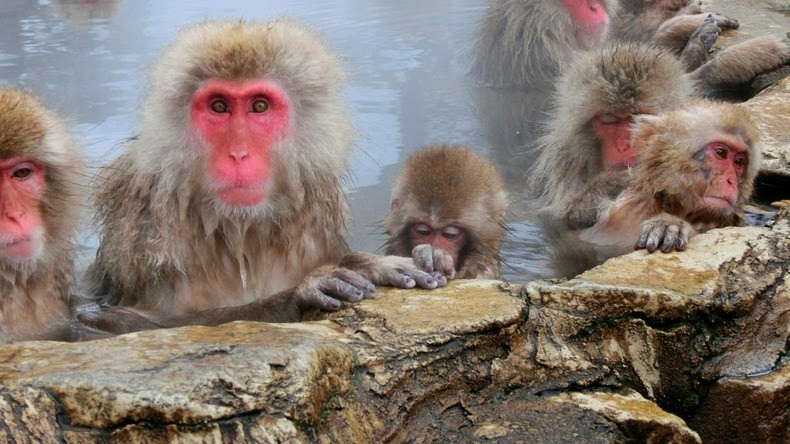 snow-monkeys-jigokudani-2