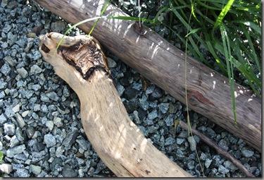 driftwood and Calamagrostis brachytricha