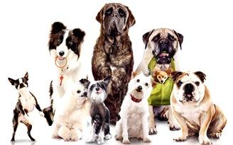 familia_de_perros
