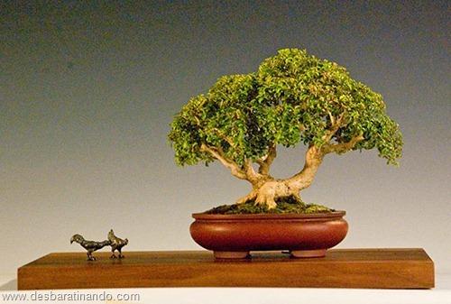 bonsais arvores em miniatura desbaratinando (61)