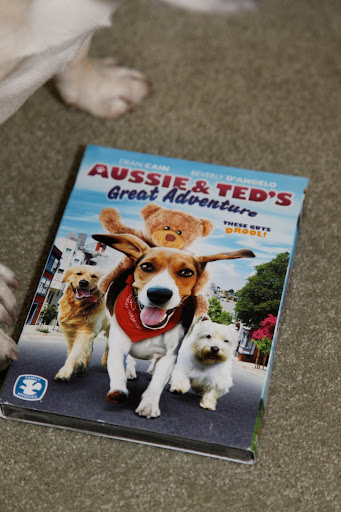 It has a title called 'Aussie & Ted's Great Adventure.'  It appears to be a story about a bunch of dogs and a Teddy bear.