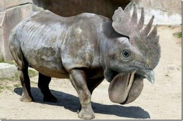 hybrid-animals-photoshop-22