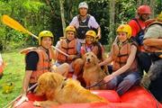 Pets Adventure 14 (10_1) (49)