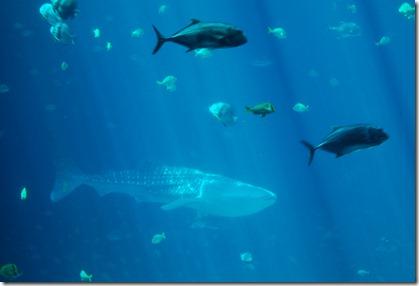 ATL aquarium 054