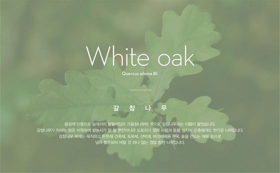 wdpk-web_o