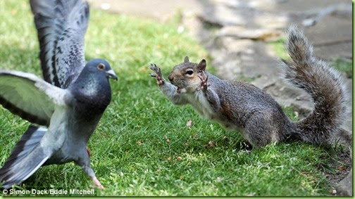 feathers and squirrels