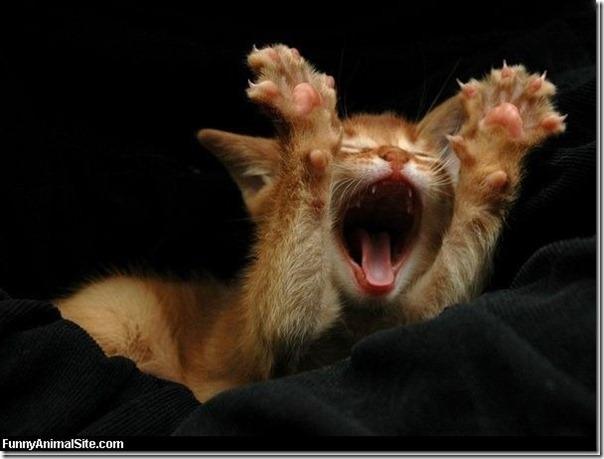 Cat_Saying_Hooray_thumb