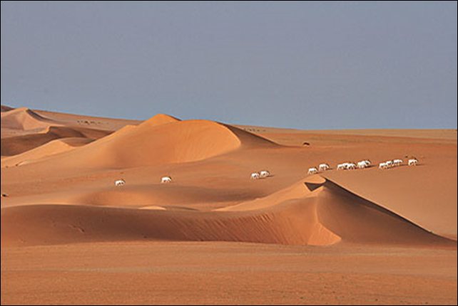 The world's largest tropical desert, the Sahara, has recently suffered a catastrophic collapse of wildlife populations. Four species of large mammals are already extinct. Species such as the Addax used to roam widely across the Sahara, but now number only a couple of hundred individuals – the recently established Termit and Tin-Toumma National Nature Reserve in Niger is one of their last strongholds. Photo: Thomas Rabeil / Sahara Conservation Fund