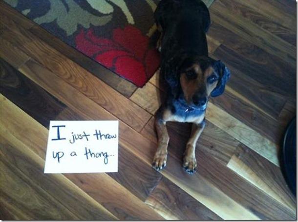 dog-shaming-bad-14
