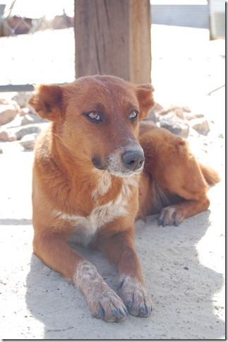 Baja 093