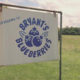 Bryant's Blueberries