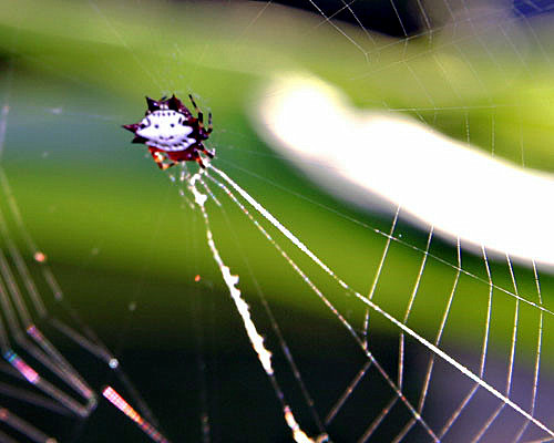 Smiley Faced Spider