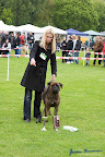 20100513-Bullmastiff-Clubmatch_31000.jpg