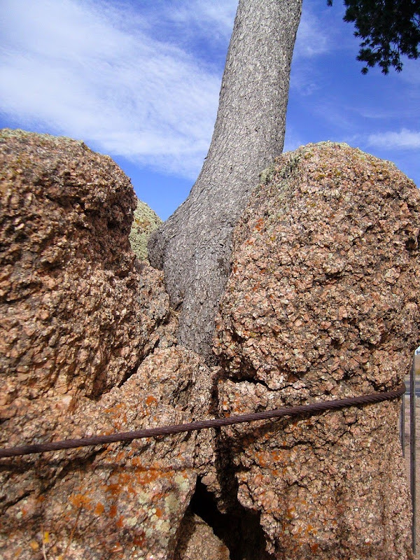tree-rock-wyoming-5