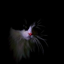 Won't deceive? by Jurijs Ratanins - Instagram & Mobile Android ( mobilography, cat, pet, portrait, animal )