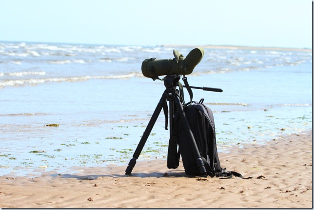 scope_on_the_beach