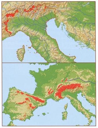 Areale di nidificazione del venturone alpino in Italia (sopra) e mondiale (sotto) – Mappa tratta da Ornitologia italiana Vol 8.