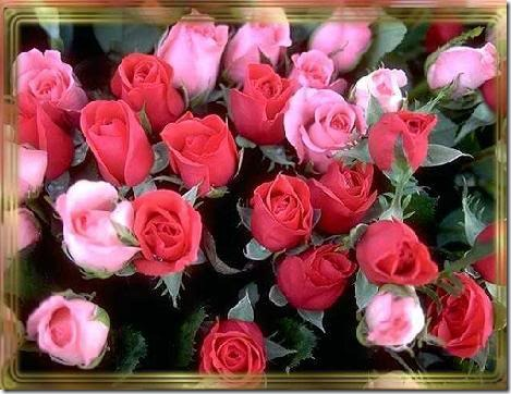 san valentin flores (13)