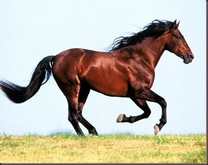 Amazing Animals Pictures Horse (4)