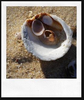 shell17