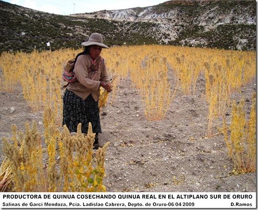 Productora_de_Quinua_de_Salinas_de_Garci_Mendoza-D.Ramos