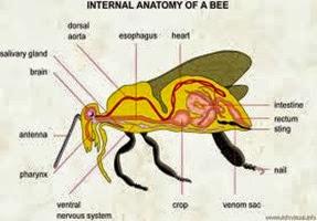 Amazing Pictures of Animals, Photo, Nature, Incredibel, Funny, Zoo, Bee, Insetcs, Anthophila, Alex (19)
