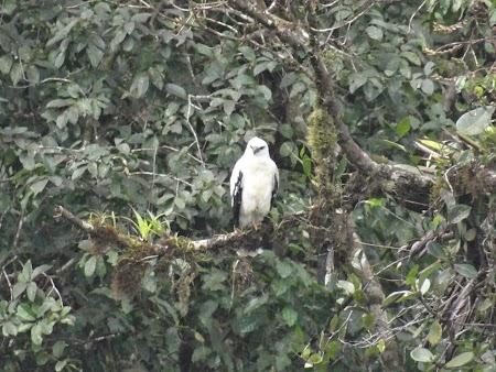 28. Vultur alb.JPG