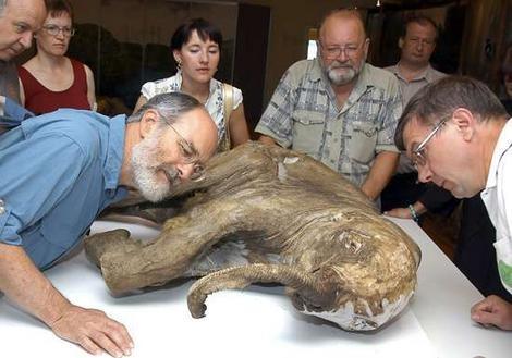 Επιστήμονες σχεδιάζουν να «αναστήσουν» τα μαμούθ (video)