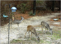 Animals-at-Deer-Lake-Cabins-Double-S[3]