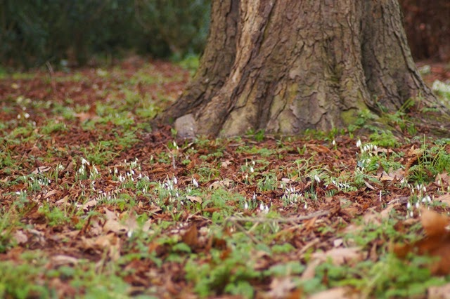 Oxburgh Hall Norfolk snowdrops signs of spring