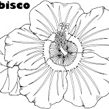 hibiscus-coloring-page.jpg