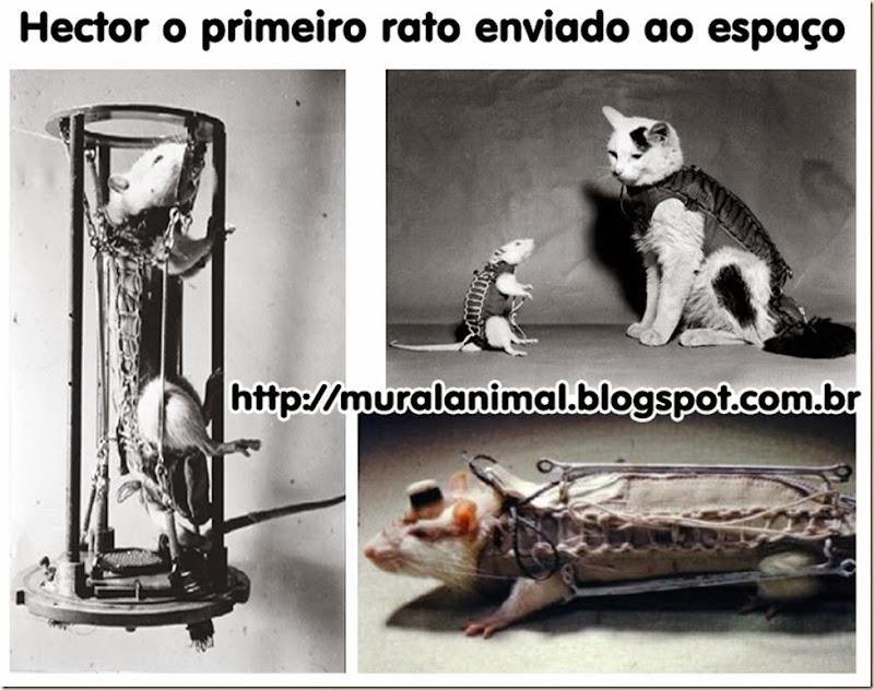 hector-rato-espaco2