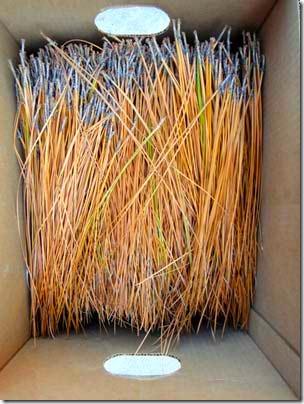 box-of-needles
