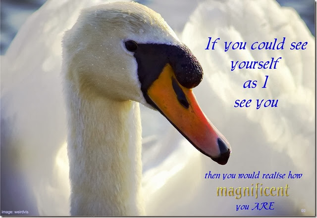 magnificent Swan-001