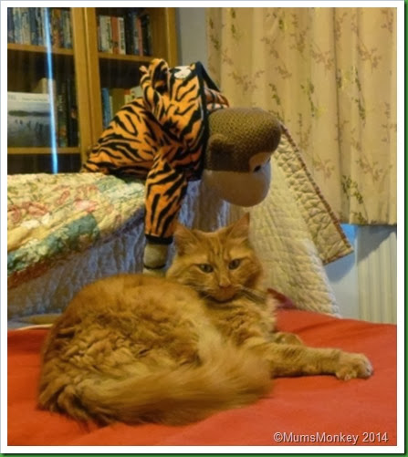 tiger v tiger