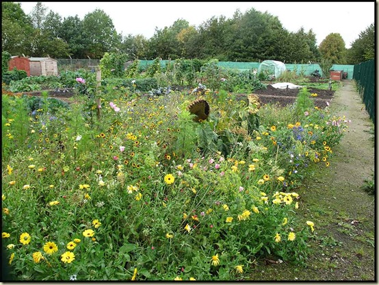 Allotments near Glaze Brook