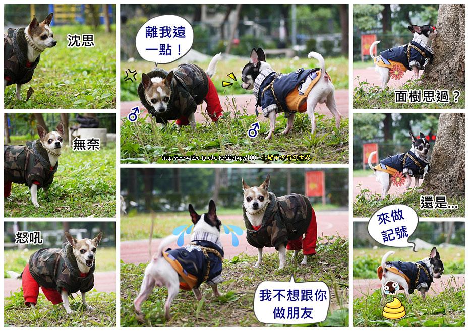 dog-fly06.jpg