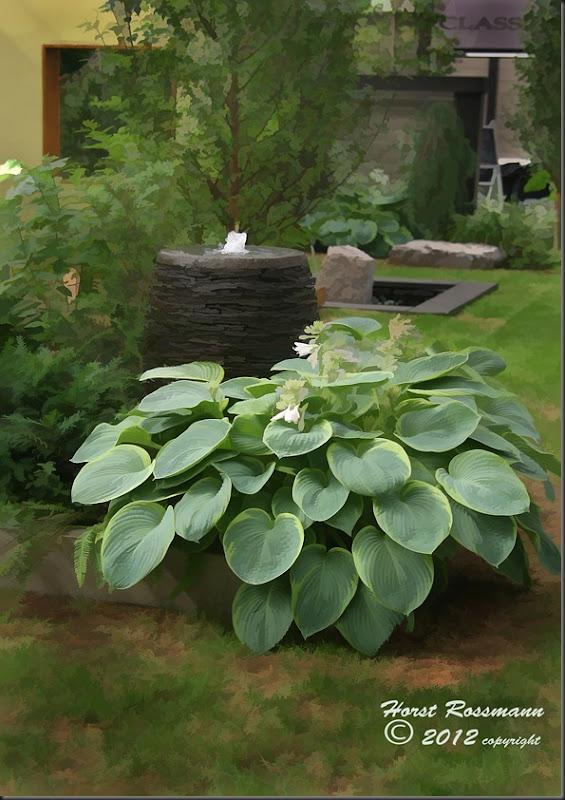 Vert garden Hosta copy