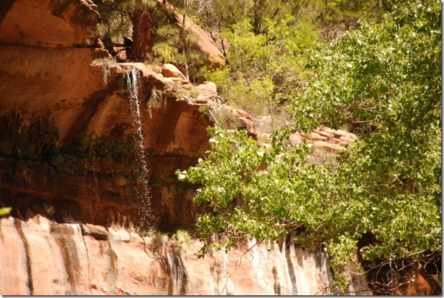 05-03-13 B Trail Emerald Pools Kayenta 038