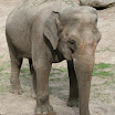 zoo_kolmarden_8916.jpg