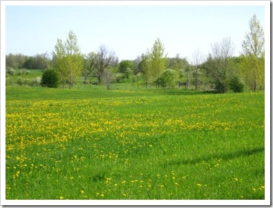 20120514_spring-property_005