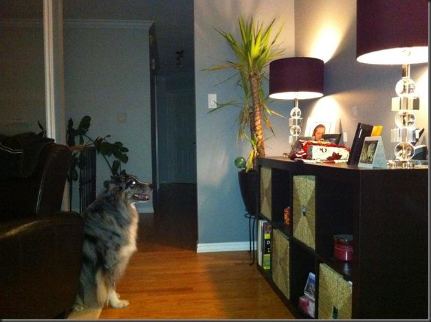 Mojo watching presents